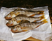 Three perch on parchment paper