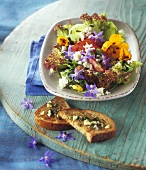 Salad leaves with herbs, edible flowers, sheep's cheese, garlic bread