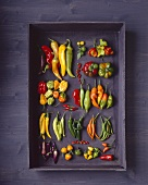 Various types of chillies on black wooden background