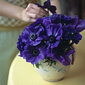 Woman putting purple anemones into a vase
