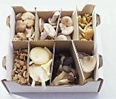 Assorted mushrooms in a cardboard box