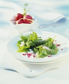 Ground elder leaf salad with radishes
