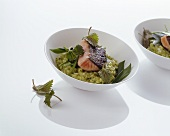 Herb risotto with fried salmon trout