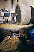 Oil mill with walnuts (France)