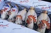 Bresse chickens with labels in cardboard box