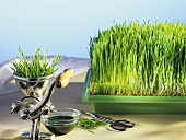 Wheatgrass with a juicer