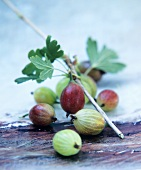 Gooseberries with branch and leaves