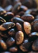Runner beans, full-frame