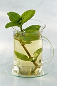 Peppermint tea in glass cup with sprig of fresh mint