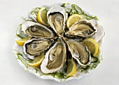 Six oysters on plate
