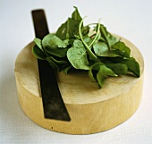 Betel leaves on a wooden board with a knife