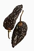 Two dried chilli peppers (chile mulato, mulatto chilli pepper)