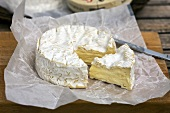 Camembert from Normandy (France)
