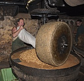 A worker pressing nuts with a grinding stone to create oil (watermill Moulin de la Tour, France)