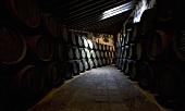 The wine cellar in Bodega Terry in Jerez de la Frontera, Spain
