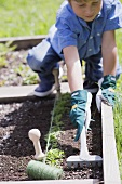 A little boy loosening the soil in a vegetable patch