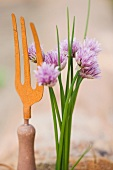 Flowering chives and a garden fork