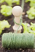Twine and a wooden peg in a lettuce patch