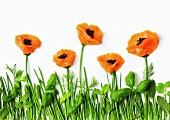 Poppy flowers in a field (composition of salmon, herbs and caviar)