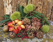 Shades of autumn: medlars, sweet chestnuts, crab apples & nuts