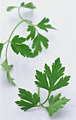 Two stalks of flat-leaf parsley