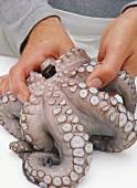 Oktopus vorbereiten: Entfernen der Kauwerkzeuge