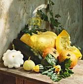 Squash and pumpkin still life
