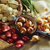 Various types of onions