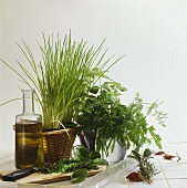 Still life with fresh herbs and olive oil