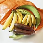 Various types of bananas