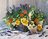 Stillleben mit Kräutern und Blüten