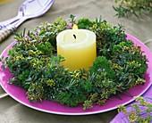 Kräuterkranz (Thymian, Rosmarin & Petersilie) um eine Kerze