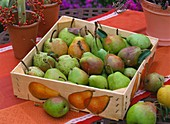 Pears in a fruit box decorated by decoupage