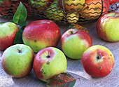 Brettacher apples