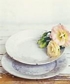 Stillleben mit Rosenblüten einem alten Teller