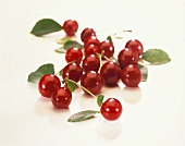 Sour cherries with leaves