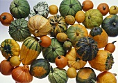 Various types of ornamental gourds