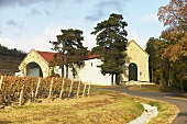 Grof Degenfeld Winery, Tarcal, Tokaj, Hungary