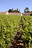 Chateau Grand Puy Lacoste, Pauillac, Medoc, Frankreich