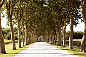 Avenue of trees to Château Margaux, Médoc, Bordeaux, France