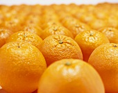 Many oranges in rows