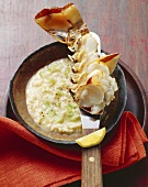 Celery risotto with spiny lobster