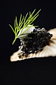 Black caviar on cracker