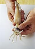 Calamaretti vorbereiten: Kopf & Fangarme aus Beutel ziehen
