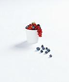Mixed berries in a beaker