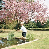 Boy dipping net in garden pond