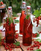 Redcurrant juice in bottles and fresh redcurrants