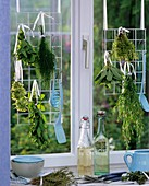 Bunches of herbs hanging up to dry, mint, oregano, dill, thyme etc.