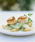 Herb ravioli with asparagus ragout and scallops