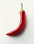 Eine Chilischote